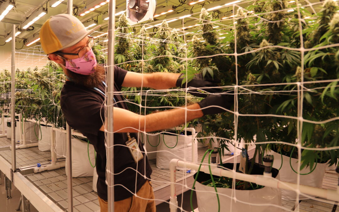 The 'Triple Bottom Line' Value of Sustainable Cannabis Cultivation